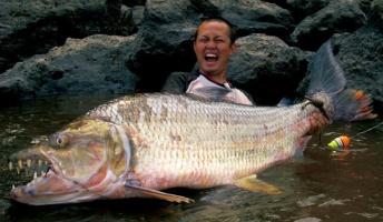 モンスターみたいな巨大魚・巨大生物の画像貼っていこうぜ!