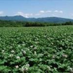 「ヤンキーは農業に向いている」元ヤン&チーマーだらけの農園