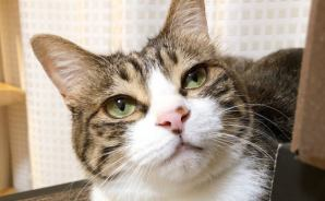 オモチャを待つ猫の姿が