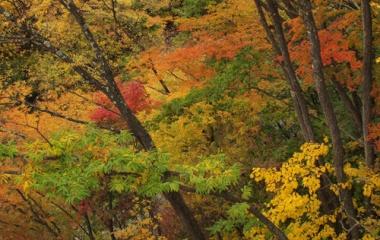 『高山村松川渓谷の紅葉10/30』の画像