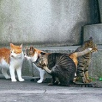 野良猫がうちの庭にいつも2、3匹でいるんだけど撃退する方法ない?