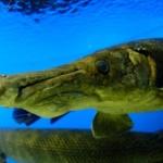 【画像】水族館行って写真撮ってきたったwww
