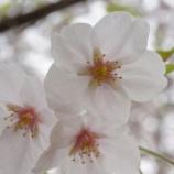 『地元の春雨』の画像