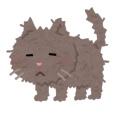 寒い中ビショビショになりながら通行く人に「ごはん下さい」と鳴いてた野良猫無事保護される
