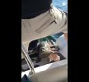 シャチに追われたアザラシ、観光船に「避難」・・・カナダ(※動画あり)