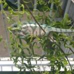 爬虫類ショップ yemen