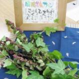 『漢方&薬膳セミナー「冬の養生とカゼ」コープカルチャー宝塚さんで開催しました』の画像