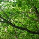 天然温泉と貸切露天風呂 塩原のガストホフ夢木香