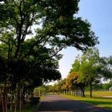 『アスレチックで遊べる三郷公園へ行ってきた』の画像
