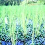 『今年最後の草取りは台風のせいで、いつもより快適でした』の画像