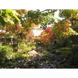 『紅葉の南下も一段と』の画像