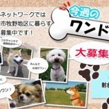 『看板犬アグー 射水ケーブル「今週のワンドル」出演決定!』の画像