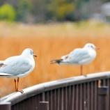 『鳥インフルエンザに関する韓国語』の画像