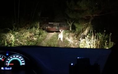 『夜道に注意』の画像