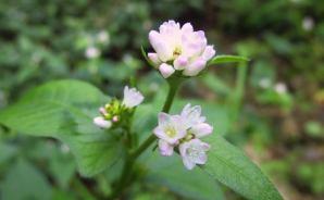 山道を散策中に見つけた植物たち
