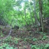 『ぶどう峠の清水 / 群馬 上野村 湧水』の画像