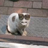 3代目招き猫のサムネイル