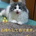 猫ちゃんだって綺麗になりたい2019