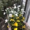 何でもない一日♪春の陽射しがキラキラしてます♪そして静かにポチッ♪