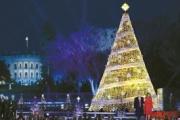 ホワイトハウスのクリスマスツリー …原産地は韓国