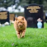 『墓場で人々を癒し続け、愛され続けた猫』の画像