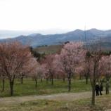 『北塩原の桜峠』の画像