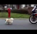 無職「犬の散歩面倒臭え。そうだ車にリード付けて走ればピコーン」