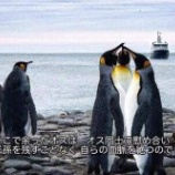 『【悲報】ペンギンの胎児、クッソキモい』の画像