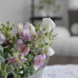 『花とグリーンのある暮らし! 夏剪定や切り戻しの花を飾って楽しむ』の画像