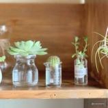 『コロナ禍ではまったもの◆100均植物の水栽培◆』の画像