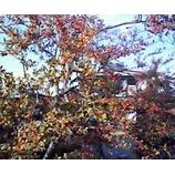 『秋は満開』の画像