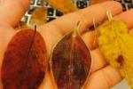 木漏れ日市が11/22(土)に開催される!~交野タイムズも『リノベーションズ』っていうお店で出店します!~