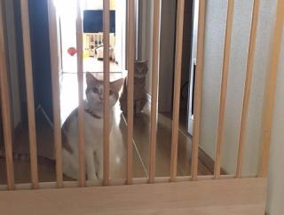 コロナ生活での変化。猫のお出迎えビフォーアフター