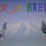 """ TOM Loft "" の レース鳩 飼育日誌"