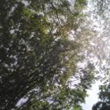 『木漏れ日』の画像