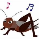 【虫注意】昆虫博士来てや!これなんて虫?