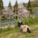 『車の1年点検の後、公園お散歩へ☆』の画像