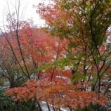 『紅葉』の画像