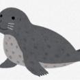 【いきもの】襟裳岬のゼニガタアザラシ369頭を捕獲 環境省が漁業被害で、16年以降 0歳の幼獣281頭も 北海道