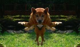 【ネット画像】   日本のネットで作られた メガ進化した動物たちの写真が おもしれえwwwwwww   【海外の反応】