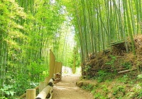 <イニエスタ>今度は京都・嵐山の竹林に参上!この2週間ほどで関西の有名スポットを軒並み制覇...世界中からコメント