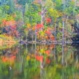 『紅葉始まりました。』の画像