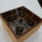 『箱灸』の画像