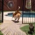 イヌたちが外に飛び出した。お庭で遊ぶ時間だぁ♪ ちょ、慌てんな! → 1匹はこうなります…