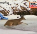 凍った川でツルツル…もがくシカの救出作戦