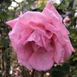 『【朝のご挨拶】JR戸田駅近くにあるBZ花壇にまた美しいお花が植えられていました。道行く人の心を和ませてくれるお花の手入れをしてくださっている方々に感謝いたします。』の画像