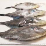 『国東の食環境(182)カワハギ』の画像
