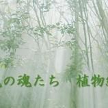 『新刊「光の魂たち 植物編」先行予約始まりました!』の画像