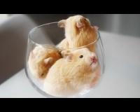 【悲報】ハムスターさんワイングラスに閉じ込められてしまうwwwwwwwwwww