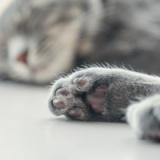 【画像】20万で猫買って1週間が経った結果wwwwwwww